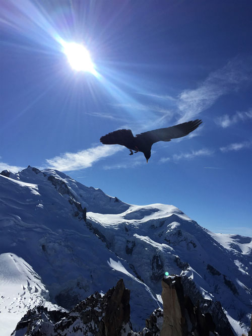 Bird over mountains spotted when sightseeing Aiguille du Midi