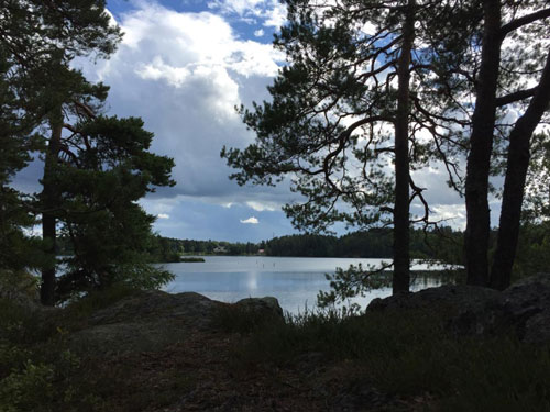 lake in forest found during dog travel Finland