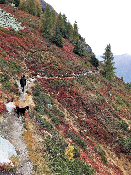 Path on steep slope when dog hiking French Alps