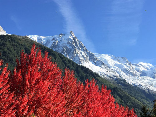 red tree and snowy mountains spotted when dog hiking French Alps