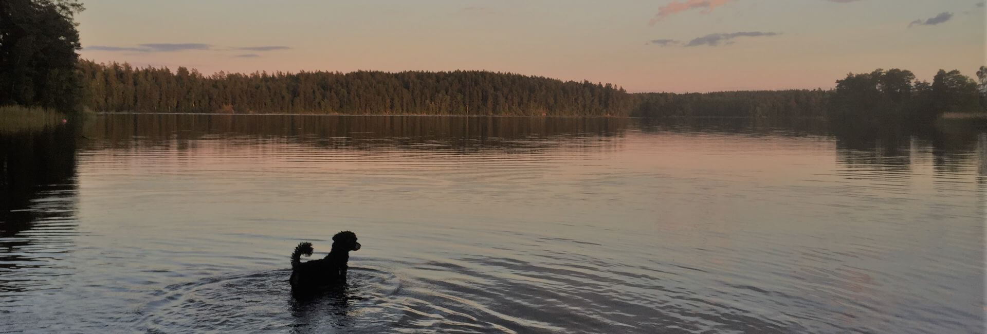 taking a swim in a lake when travel with dog