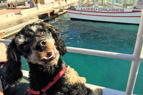 Dog on boat tour during dog travel Malta