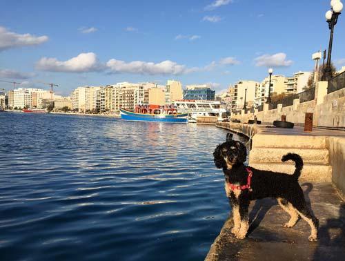 Dog at harbour during dog travel Malta, 2