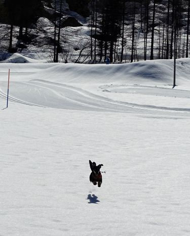 Happy dog jumps during dog travel in French Alps
