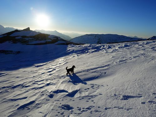 Dog walks in snow during dog travel French Alps