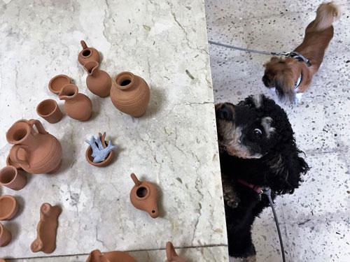 Dog on a bus tour sniffs handicraft