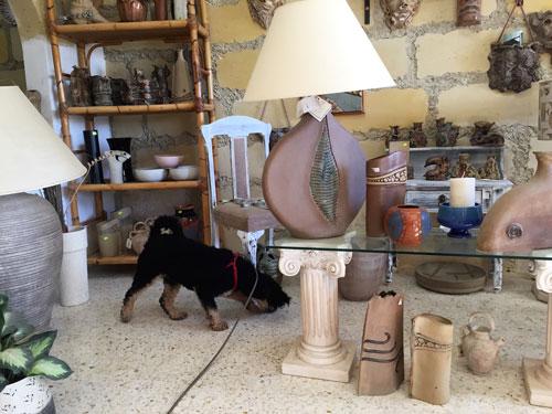 Dog on a bus tour sniffs souvenir shop