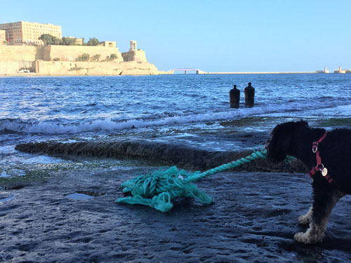 Dog finds rope when discovering the Maltese coast