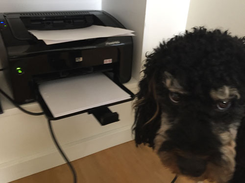TravellerDog in front of printer with paper in it