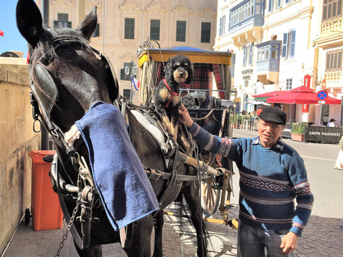 Travelling Dog on a horse in Malta