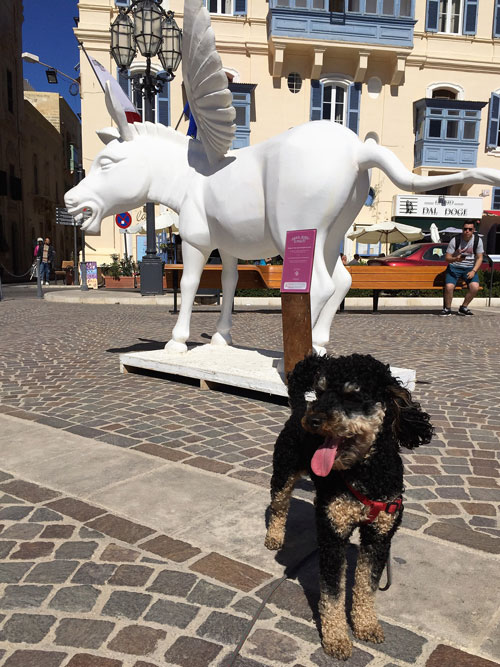 Travelling Dog in front of white art in Malta