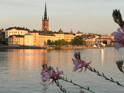 Sunset in Stockholm with water and flowers in foreground