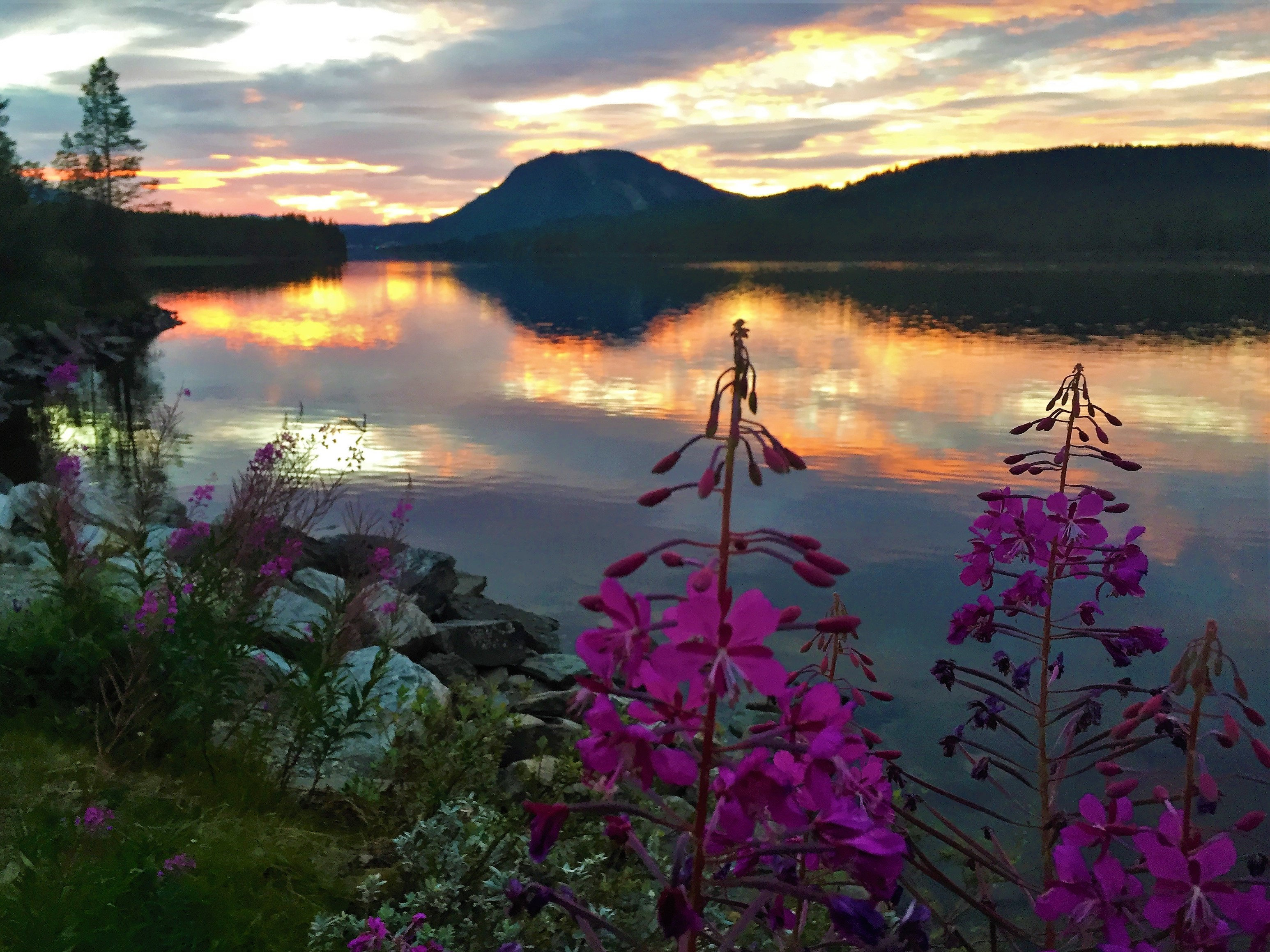 Red flowers and beautiful colors at sunset in Jämtland, Sweden