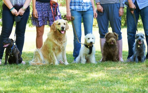 Group Of Dogs With Owners At Obedience Class in Sicily