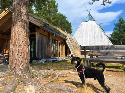 Dog in front of Sami museum in Norway