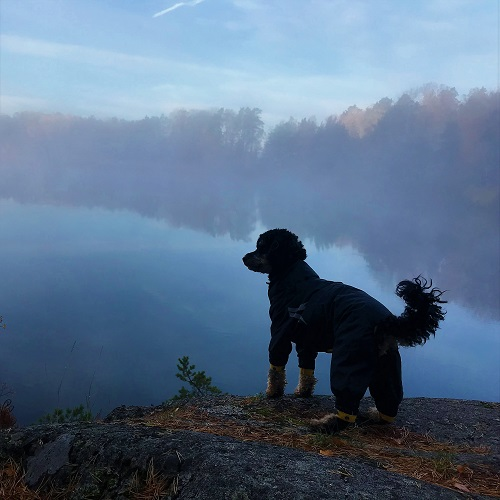 Silhouetto of dog standing in front of hazy lake during fall