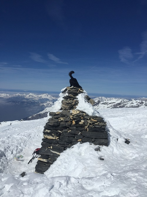 Dog on top of mountain-marker in French Alps with beautiful scenery behind
