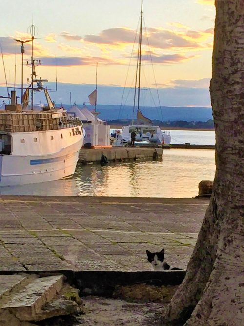 Sunset over harbor in Sicily. A cat looking up behind a little wall