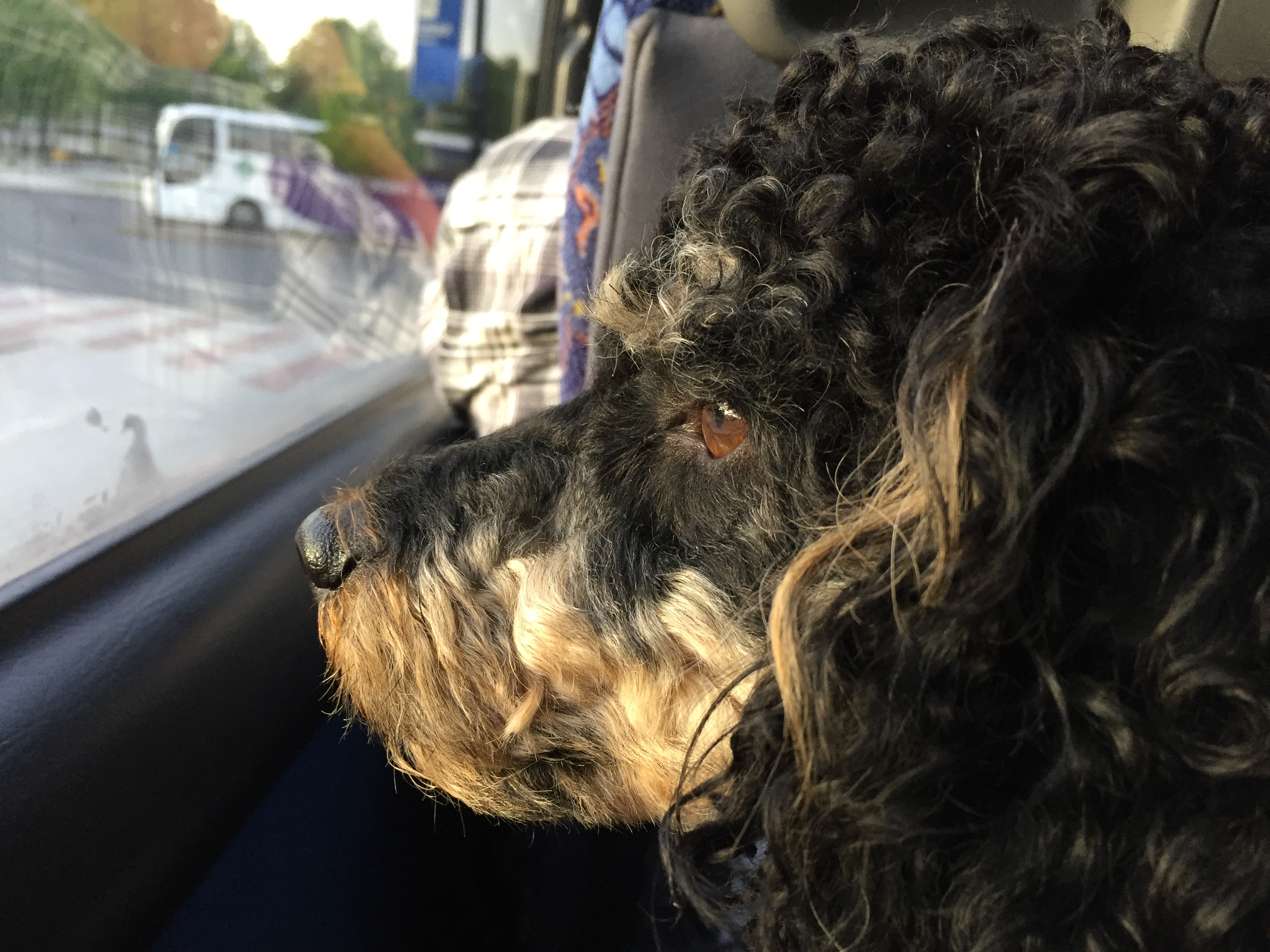 Dog looking out the window on a bus in Finland