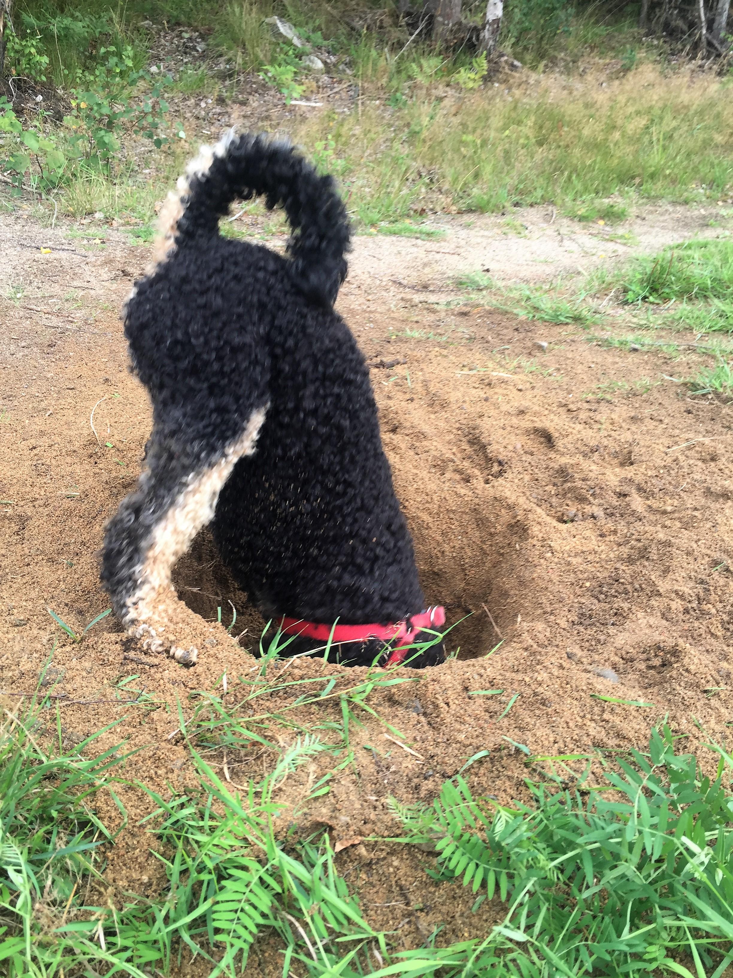 Dog digs big hole in Swedish forest