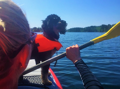 Dog in life-jacket standing on kayak on Swedish lake, woman paddling