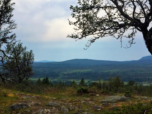 The view Pompe, the TravellerDog, sees when hiking in the Swedish moutians.