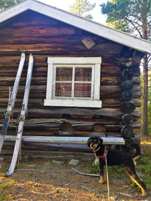Pompe stands outside a log-cabin in Norway. Some old skis are leaning against the wind-polished brown logs.