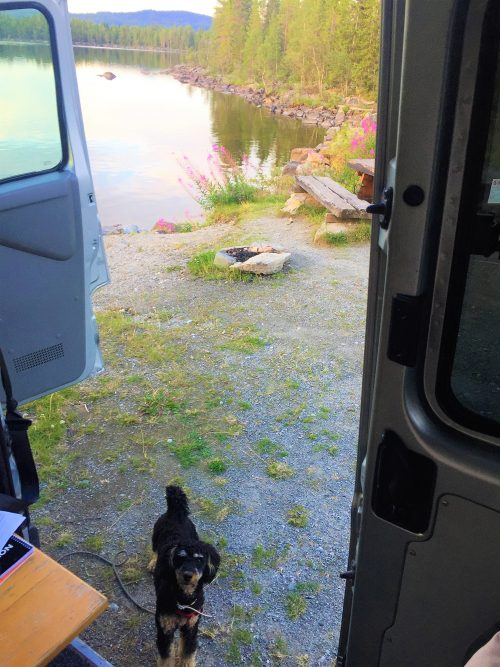 Pompe looking at mama who is in the camper. Behind him is a beautiful lake in Jämtland, Sweden.