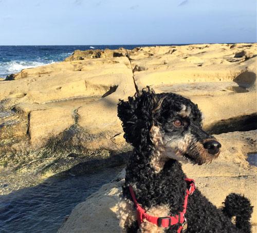 Dog-on-Beach-Malta