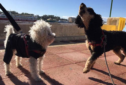 Pompe-Meets-Biker-Dog