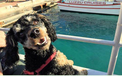 happy dog on the dog boat tour, 2