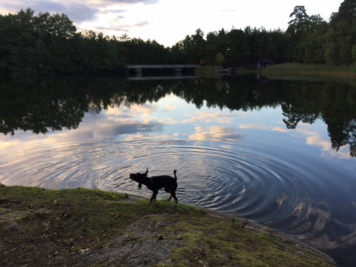 Dog shaking off water after dog swim
