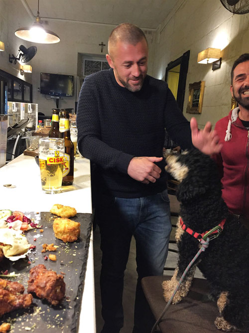 Dog in Malta bar being fed delicacies while sitting on bar stool