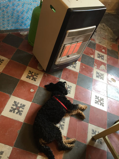 Dog and gas heater