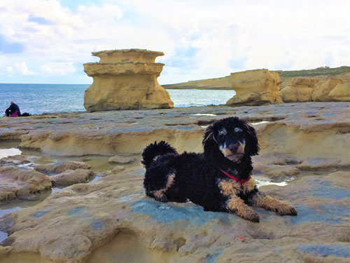 Dog laying down on cliff near Peters Pool, Malta