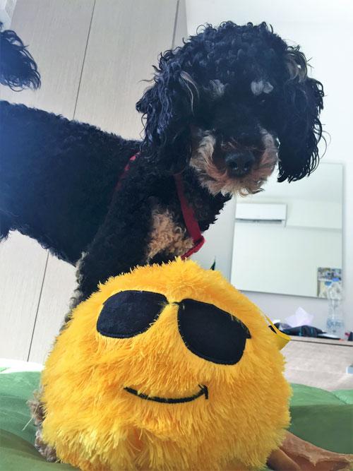 Dog gets new cool ball on Malta