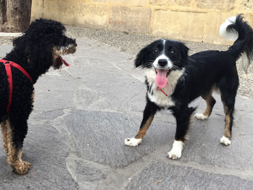 Two happy dogs in Malta