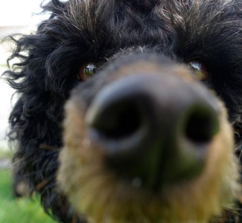 Pompe-Traveller-Dog-Nose